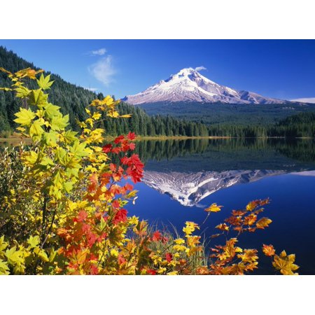 Autumn Leaves Growing Near Mount Hood and Trillium Lake Mountain Photo Print Wall Art By Craig