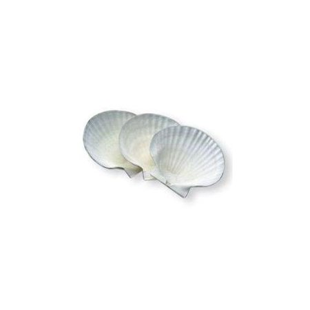 1 x one canape dish natural scallop sea shell 5 5 inch for How to make canape shells at home