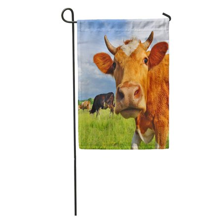 LADDKE Livestock Head of Cow Against Pasture Grazing Beef Husbandry Landscape Garden Flag Decorative Flag House Banner 28x40 inch ()