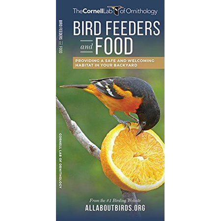Bird Feeders and Food: Providing a Safe and Welcoming Habitat in Your Backyard