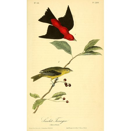 Birds of America 1844 Scarlet Tanager Canvas Art - JJ Audubon (24 x 36)