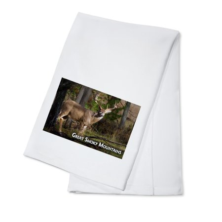 Great Smoky Mountains, Tennessee - White-tailed Deer Buck - Lantern Press Photography (100% Cotton Kitchen Towel)