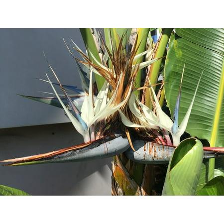 Framed Art For Your Wall Palm Flower Banana Flower Banana 10x13 Frame