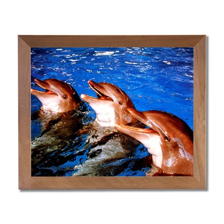 3 Bottlenose Dolphins Ocean Fish Outdoor Wall Picture Honey Framed Art Print