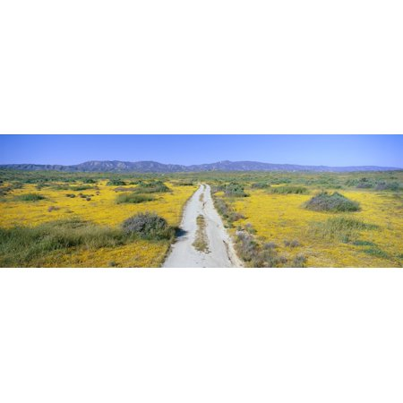 Panoramic View Of Spring Flowers And Green Rolling Hills In Carrizo Plain National Monument San Luis Obispo County California Canvas Art   Panoramic Images  27 X 9