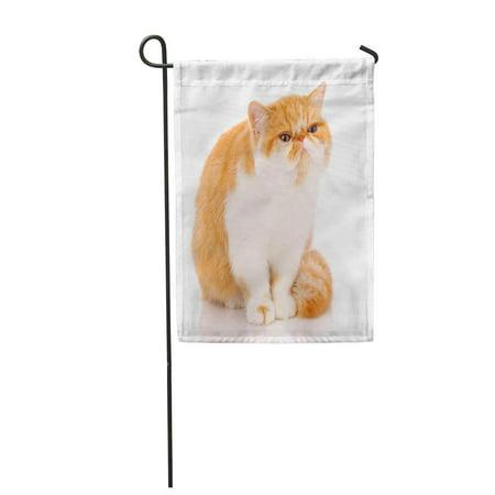 KDAGR Attentive Cat Pet Exotic on Adorable Copyspace Cute Garden Flag Decorative Flag House Banner 12x18 (Best Exotic House Pets)