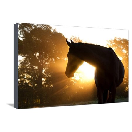 Beautiful Arabian Horse Silhouette Against Morning Sun Shining Through Haze And Trees Stretched Canvas Print Wall Art By Sari ONeal