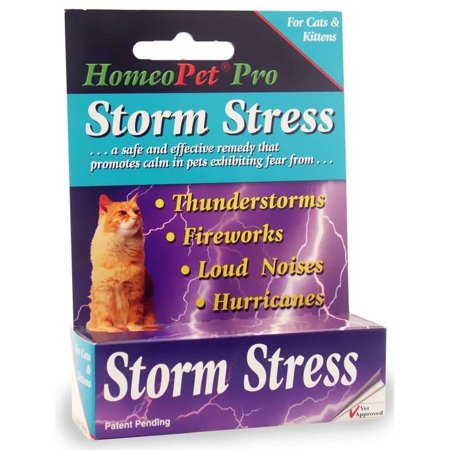 Storm Stress For Cats   Kittens