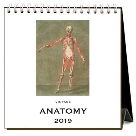 2019 Anatomy Easel Calendar, by Found Image Press