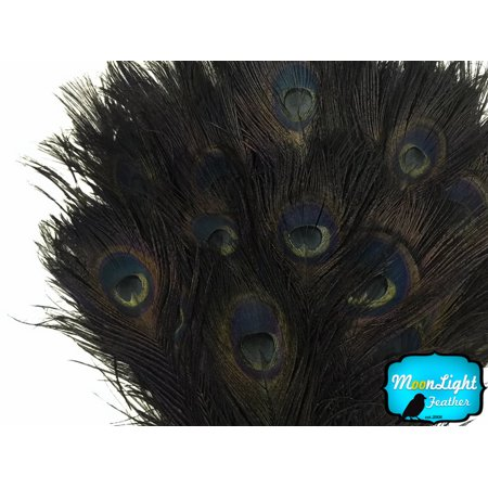 Peacock Feather Costume Tail (100 Pieces - 30-35