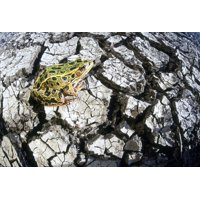 Leopard Frog On Dry Farmland Red River Valley Manitoba Canvas Art - Dave Reede  Design Pics (16 x 11)