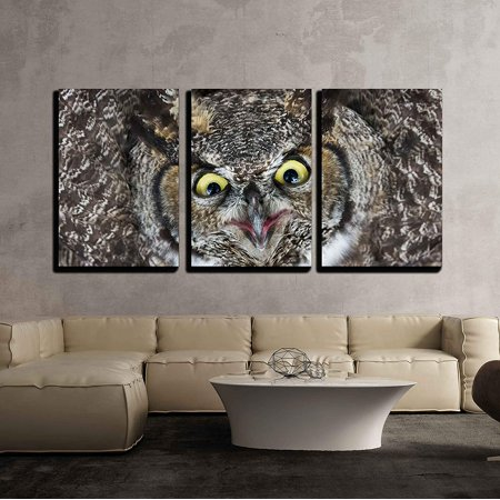 wall26 - 3 Piece Canvas Wall Art - Great Horned Owl Close Up Shot, Bc Canada - Modern Home Decor Stretched and Framed Ready to Hang - 16