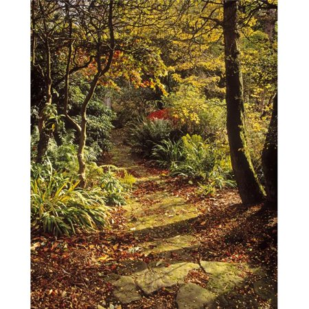 Posterazzi DPI1798230LARGE Woodland Path Mount Stewart Ards Peninsula Co Down Ireland Poster Print by The Irish Image Collection, 24 x 30 - Large - image 1 of 1