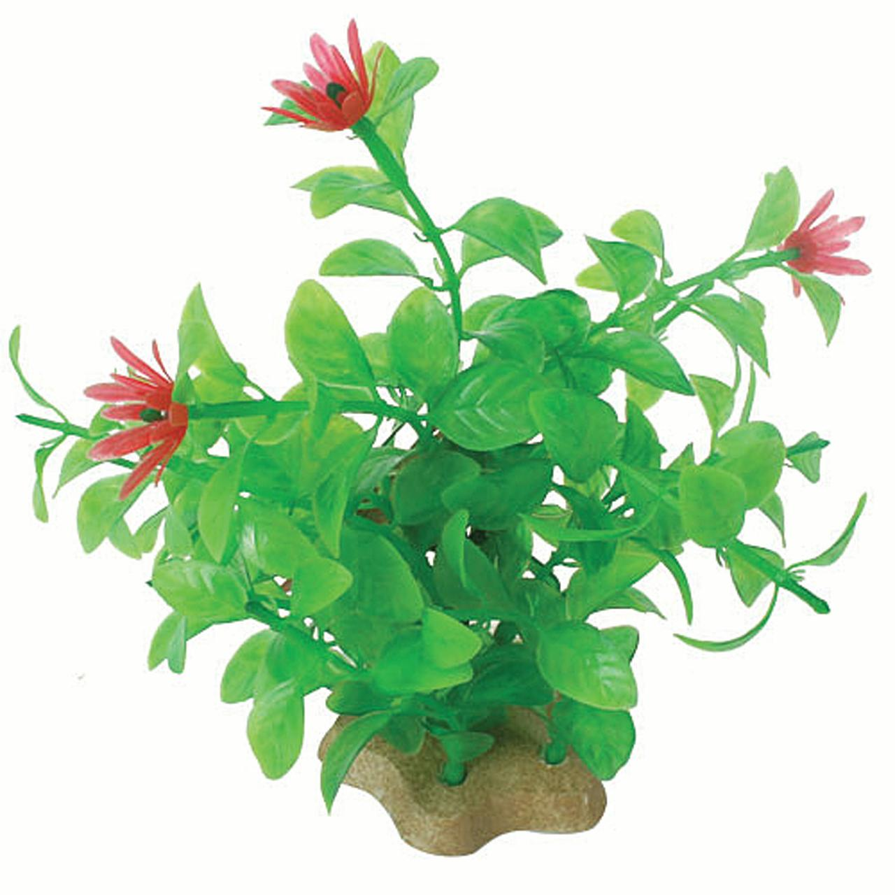 NATURAL ELEMENTS BLOOMING LUDWIGIA PLANT