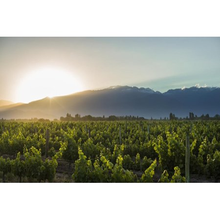 Malbec vineyards at the foot of the Andes in the Uco Valley near Mendoza, Argentina, South America Print Wall Art By Alex
