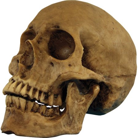 Resin Skull Cranium Halloween Prop - Skull Halloween Yard Decorations