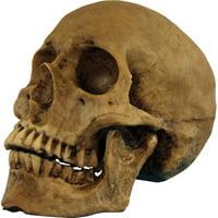 Resin Skull Cranium Halloween Prop