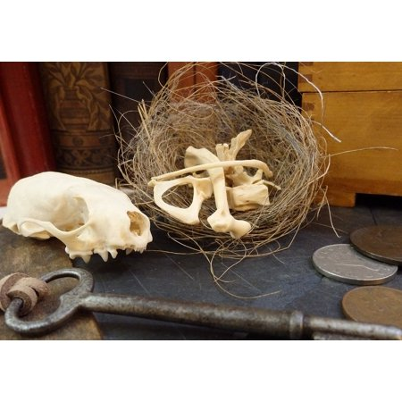 Nest Key - LAMINATED POSTER Skull Key Nest Bones Poster Print 24 x 36