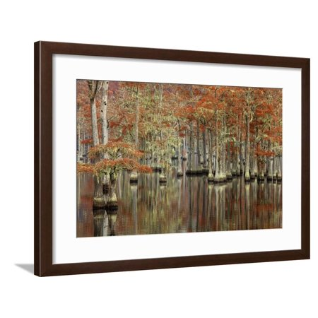 USA, Georgia, Cypress Swamp with Fall Reflections Framed Print Wall Art By Joanne Wells