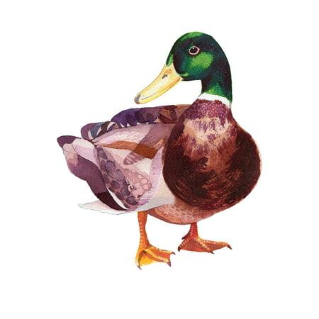 Mallard Duck Home Wall Shelf Decor Animal Decorations Watercolor Prints