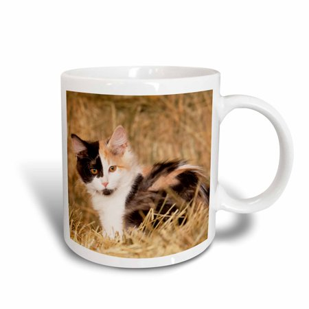 3dRose Longhair calico kitten in golden grass - NA02 PWO0136 - PiperAnne Worcester, Ceramic Mug, 15-ounce
