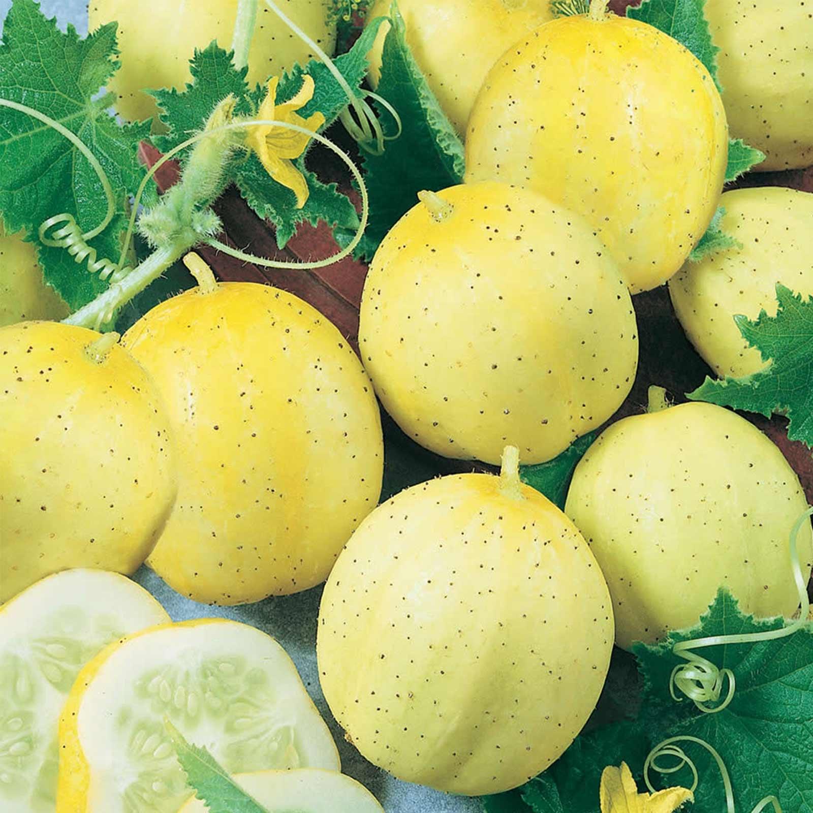 Lemon Cucumber Garden Seeds - 1 Oz - Non-GMO, Heirloom Vegetable Gardening Seeds - Yellow Cucumbers