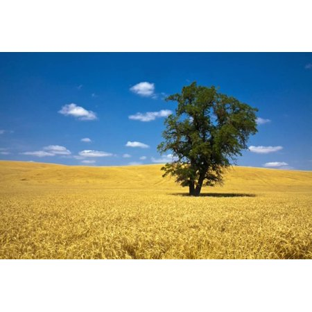 Harvest By Terry - Lone Tree in Harvest Wheat, Palouse Country, Washington, USA Print Wall Art By Terry Eggers