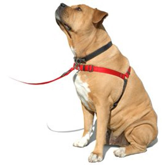SENSE-ation No-Pull Dog Harness - Red, Large (Wide) Softouch Concepts
