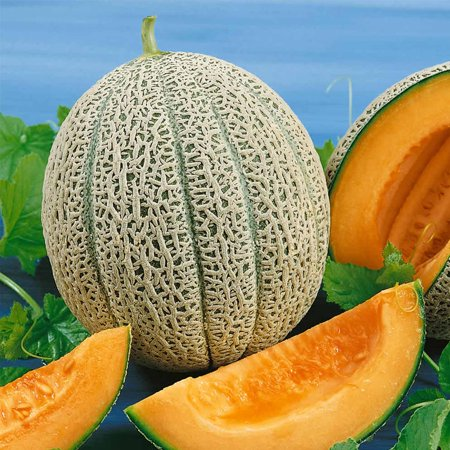 Cantaloupe Melon Garden Seeds - Hales Best Jumbo - 1 Oz - Non-GMO, Heirloom, Organic Vegetable Gardening Seeds -