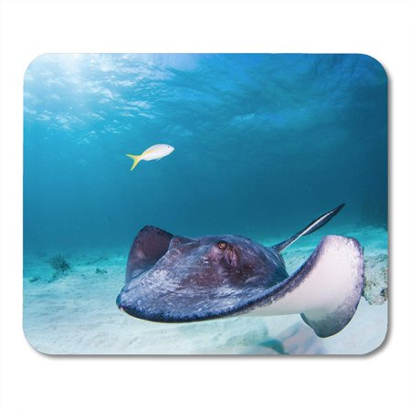 KDAGR Southern Stingray Glides Through The Shallow Blue Waters of North Sound in Grand Cayman Scuba Diver Who Mousepad Mouse Pad Mouse Mat 9x10 inch (Stingray Mouse Pad)