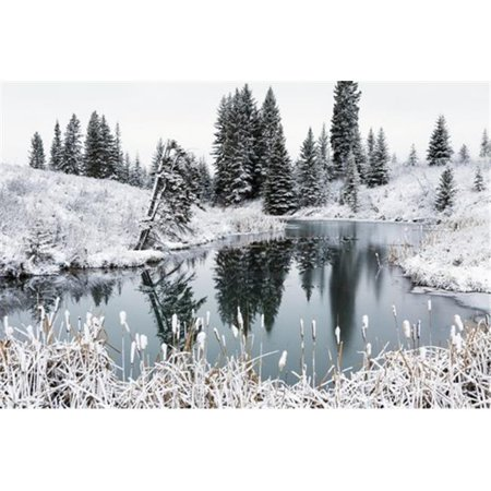 An Open Pond In The Winter With Snow Covered Hilly Banks Evergreen Trees   Bulrushes   Calgary Alberta Canada Poster Print By Michael Interisano  44  19 X 12