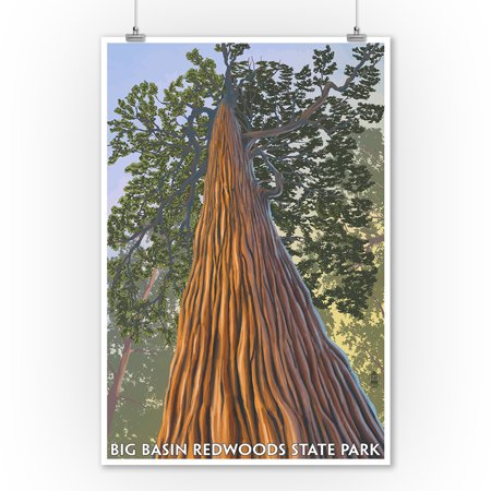 Big Basin Redwoods State Park, California - Looking up Tree - Lantern Press Artwork (9x12 Art Print, Wall Decor Travel Poster)
