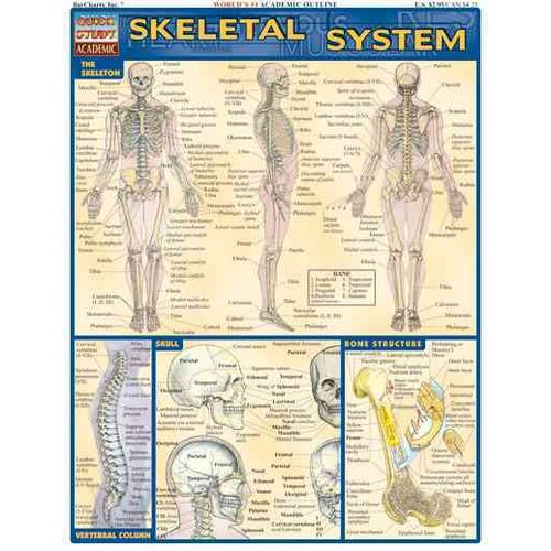 Skeletal System Quick Study Reference Guide