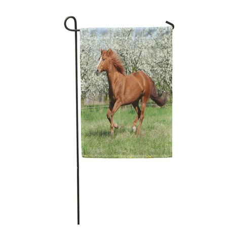 LADDKE Brown Run Chestnut Quarter Horse Running in Front of Flowering Trees Spring Blos Garden Flag Decorative Flag House Banner 28x40 inch ()