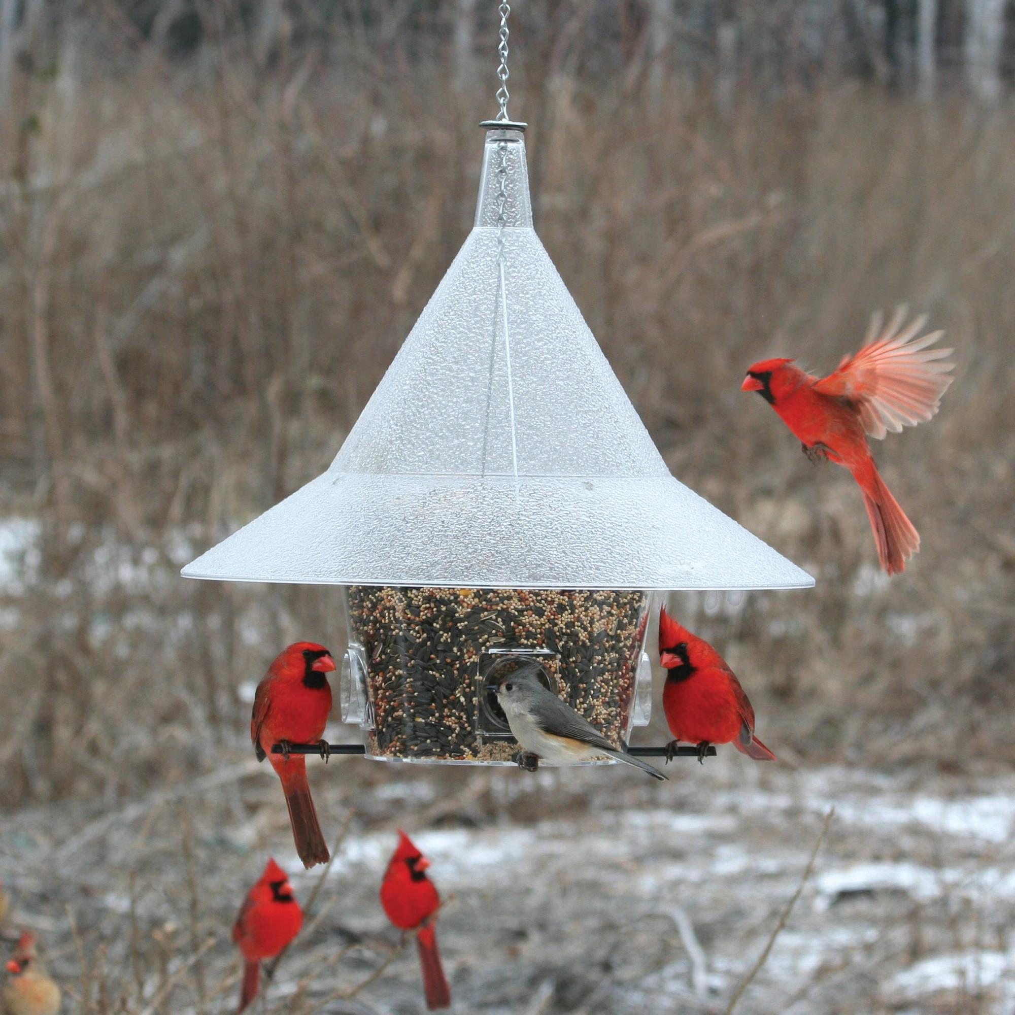 Arundale Mandarin Birdfeeder by Birdfeeders