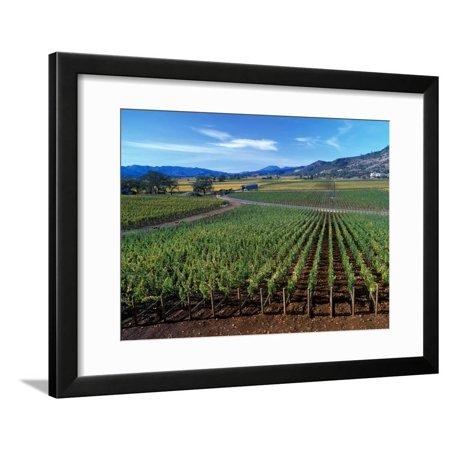 Vineyards along the Silverado Trail, Miner Family Winery, Oakville, Napa Valley, California Framed Print Wall Art By Karen Muschenetz ()