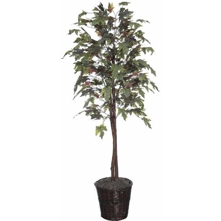 Vickerman 6 Artificial Frosted Maple Tree In Rattan Basket