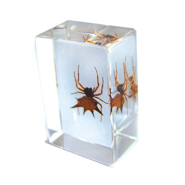 Ed Speldy East PW110 Real Bug Paperweight Regular-small-Spiny spider