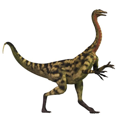 Deinocheirus was an ostrich dinosaur that lived during the Late Cretaceous Period of Mongolia Poster Print