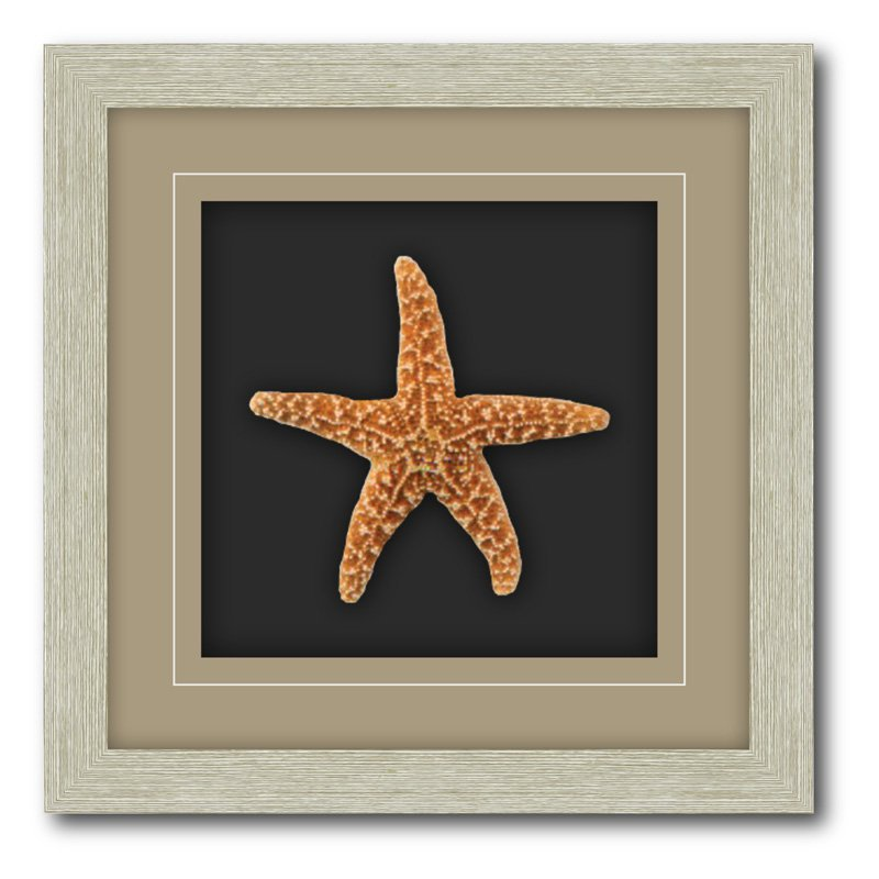Shadow Box Frame Double Matte Mounted Starfish with Driftwood Molding