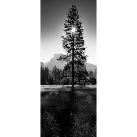 Sun Behind Pine Tree Half Dome Yosemite Valley California USA Canvas Art - Panoramic Images (15 x 6) ()