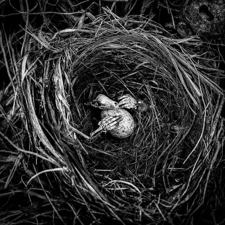 Canvas Print Halloween Creepy Skeleton Scary Egg Nest Mood Stretched Canvas 10 x - Our Family Nest Halloween 2017