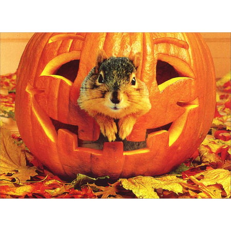 Avanti Press Squirrel in Pumpkin Halloween Card (Halloween Shaker Cards)