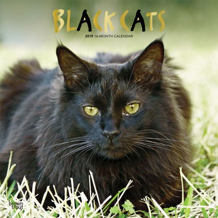 2019 Cats Black Wall Calendar, Black Cats by BrownTrout