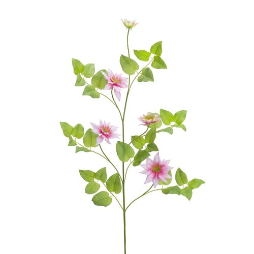 Charlton Home Clematis Vine Desktop Flowering Plant (Set of 12)