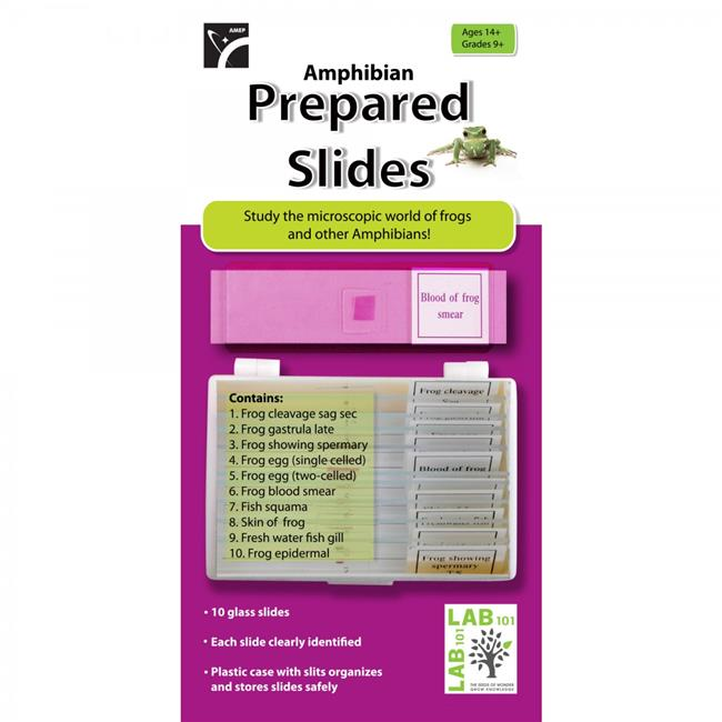 American Educational 7-1353-RT Prepared Slides Amphibians - Pack of 10
