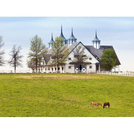 Thoroughbred Horses Grazing, Manchester Horse Farm, Lexington, Kentucky, Usa Print Wall Art By Adam
