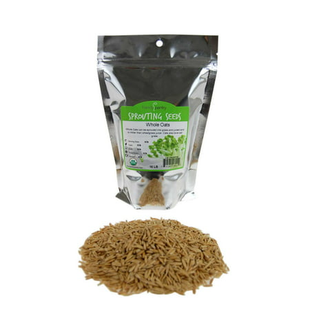 Organic Non-GMO Whole Oat Grain Seeds (With Husk Intact)- 1 Lb Re-Sealable Pouch- Oats Seed Grains, for Sprouting, Oat Grass, Animal Feed, Storage &