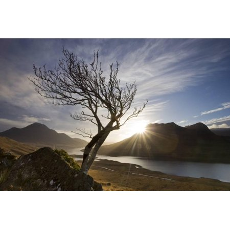 Tree Silhouette Outdoor Print (Rowan Tree Silhouetted Above Loch Lurgainn with Cul Mor (Left) and Ben More Coigach Beyond, UK Print Wall Art By Mark Hamblin )