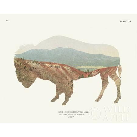 American Southwest Buffalo Poster Print by Wild Apple Portfolio